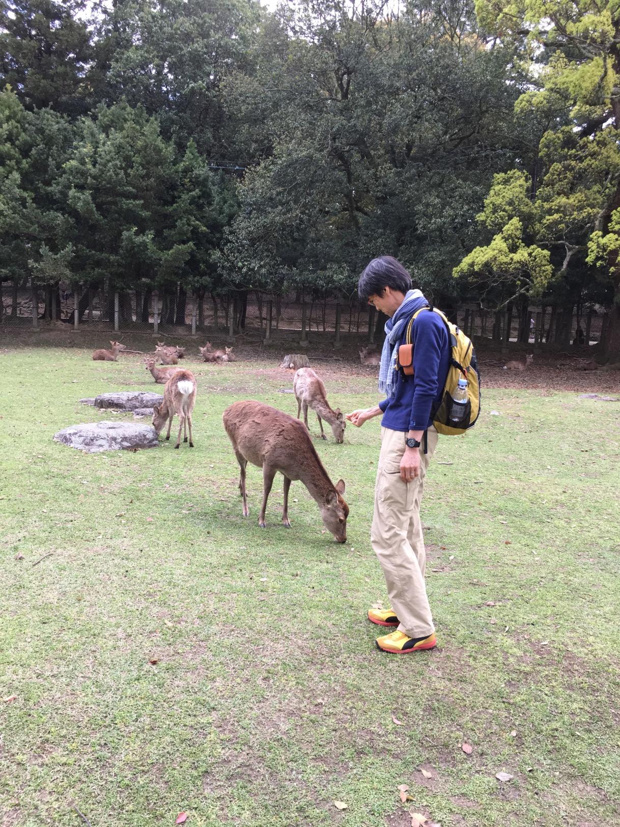 奈良に帰ってきました